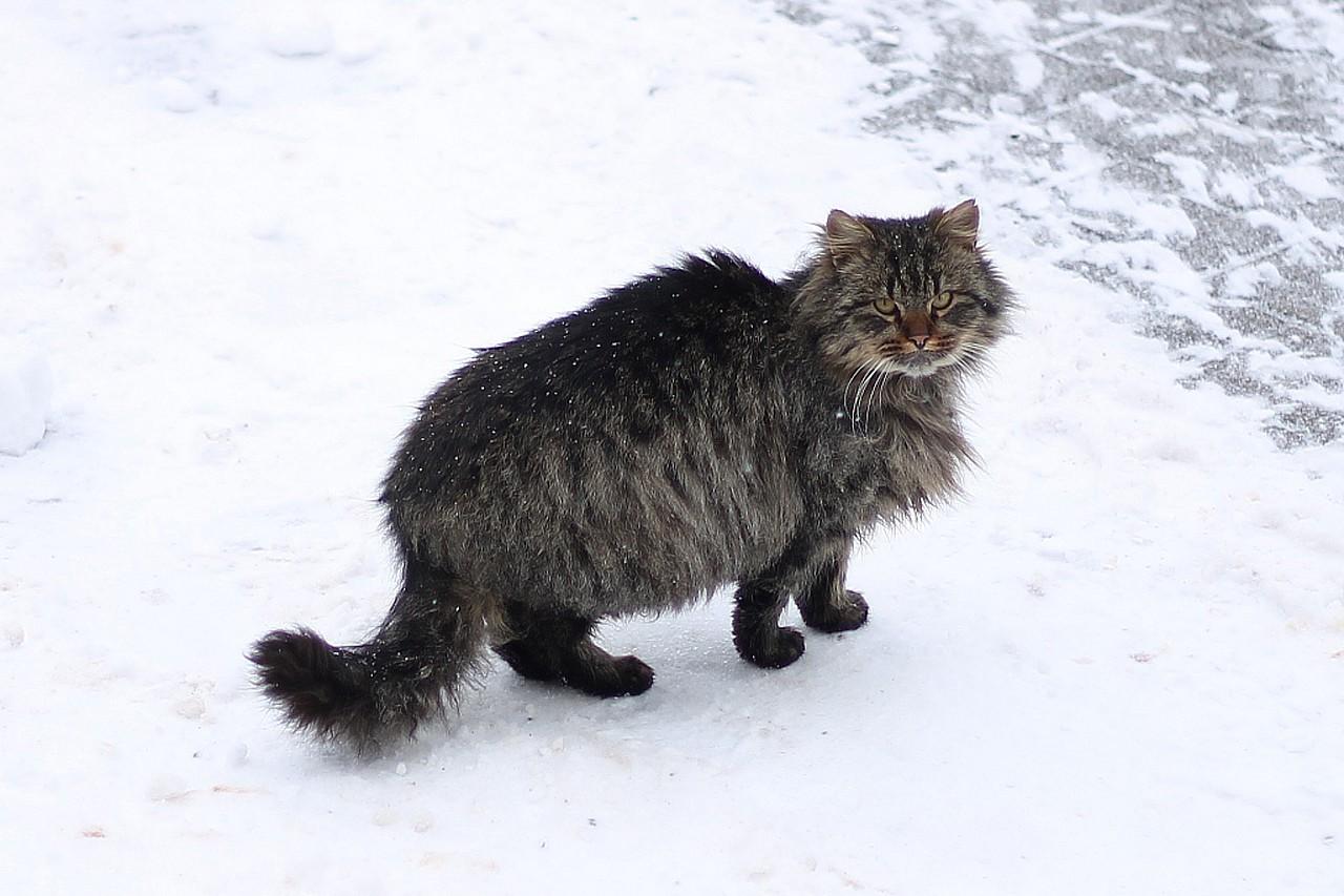 Кот, санаторий 'Буг'
