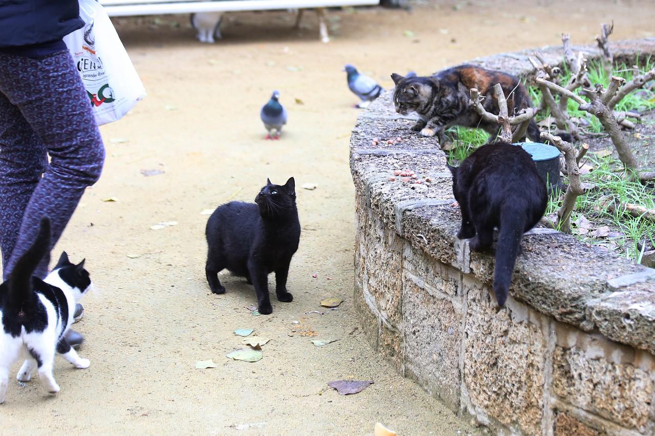 Cadiz cats